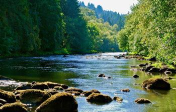 Tualatin River in the summer with rocks in the foreground