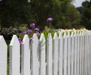 White picket fence with purple wildflowers growing.
