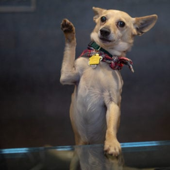 Oregon Humane Society—Adapting to Unprecedented Challenges_Arthur Waving