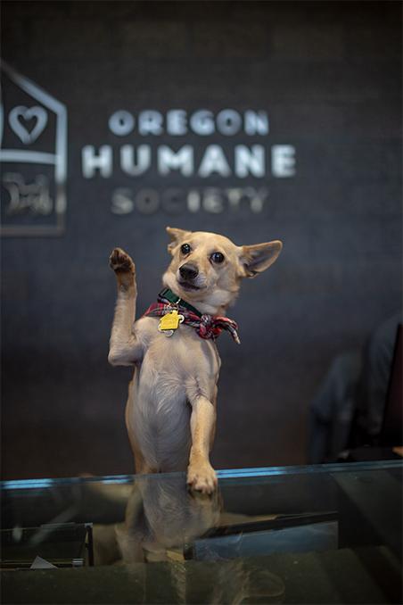 Oregon Humane Society—Adapting to Unprecedented Challenges_Arthur Waving