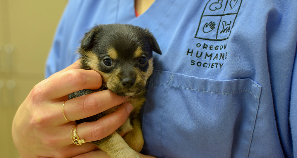 Oregon Humane Society—Adapting to Unprecedented Challenges_small puppy with employee_1015x540