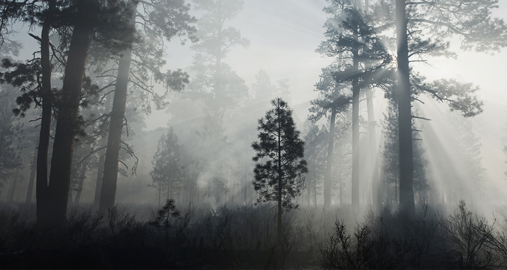 Red Cross Cascades Region Helps Communities Recover_Forest through smoke