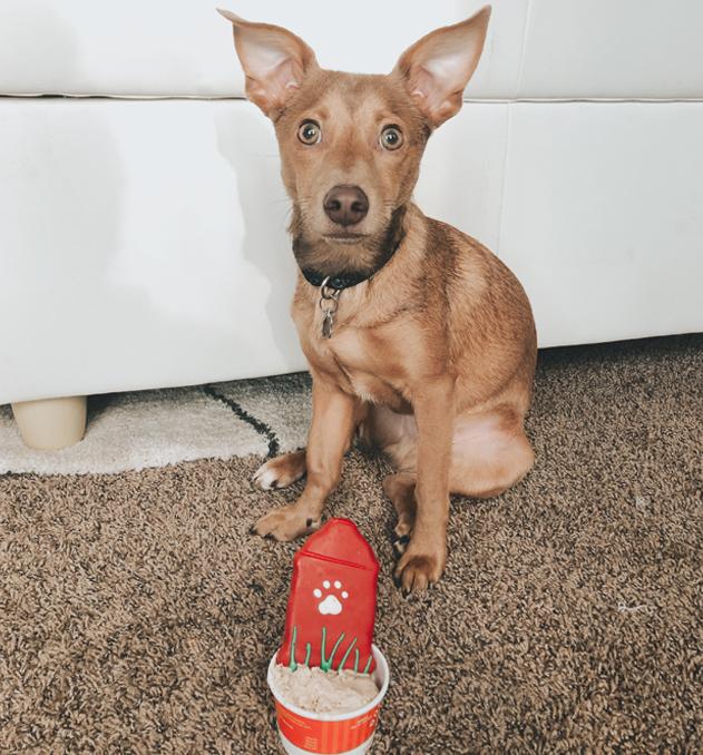 Lacee Swanson employee spotlight_Lacee puppy birthday