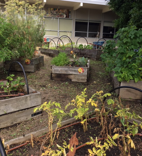 Atkinson Elementary shows their community garden for their Gardening and Cultural Cooking project