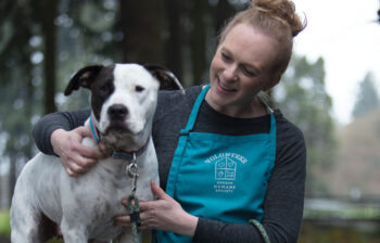 Volunteer for Oregon Humane Society cares for a dog available for adoption