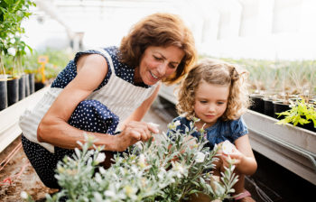 A happy small girl with senior grandmother gardening in the greenhouse, looking at a plant.