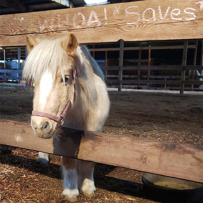 The Gift of Giving - Odd Man Inn Wins $5,000_runner up WHOA - Willamette Horse Outreach Alliance