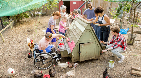 community giving_working together to build a chicken coup